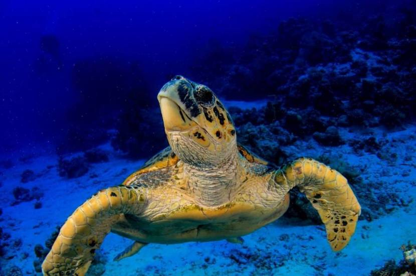 Fun Diver Program with SUBEX in Sharm El Sheikh