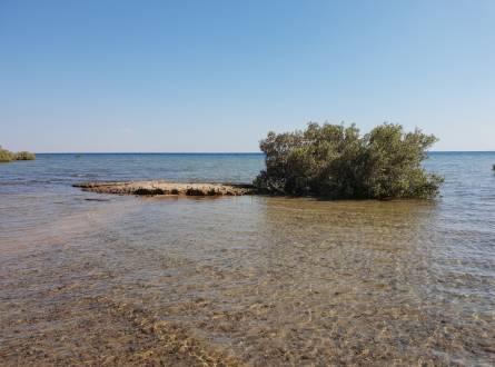 محمية نبق – بيئة متنوعة وأفضل موقع للتخييم في مصر