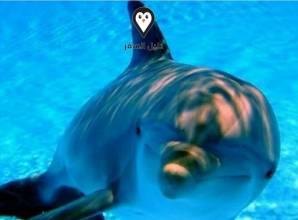 السباحة مع الدلافين في شرم الشيخ – أمتع وقت وذكري جميلة لا تنسي