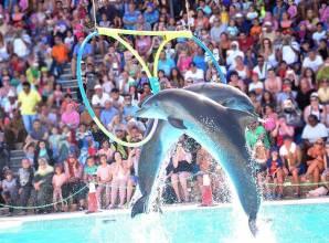Dolphin show in Sharm El-sheikh