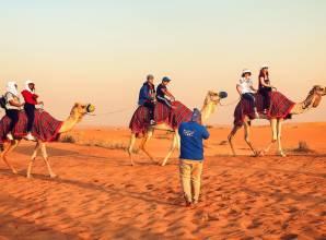 محمية دبي الصحراوية ومجموعة نادرة من الحيوانات والنباتات