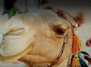 سفاري في الغردقة - Desert Lover