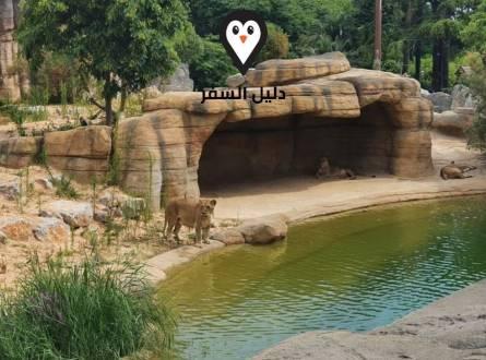 حديقة حيوان برشلونة – عُرفت بموطن الغوريلا البيضاء