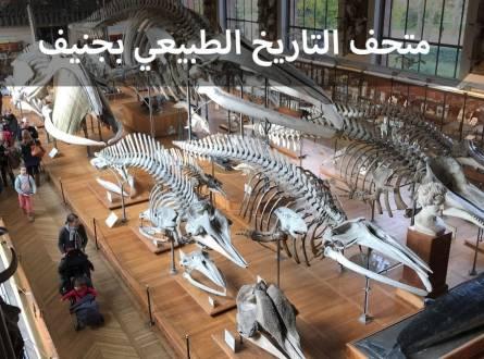 متحف التاريخ الطبيعي في جنيف وفرصة لمشاهدة سلحفاة جانوس الشهيرة
