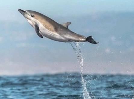 قرية دولفين العين السخنة استمتع بعطلتك مع صحبة الدلافين