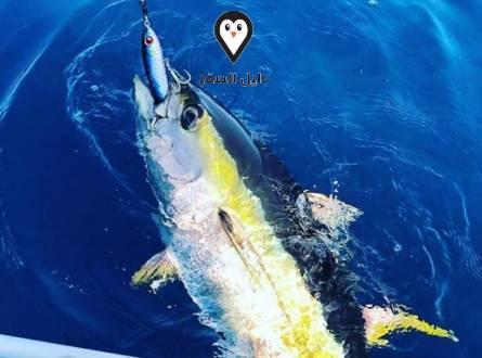 رحلات صيد سمك في شرم الشيخ- متعة سياحية أخرى لا تفوتك