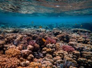 Best Dive Sites In Hurghada