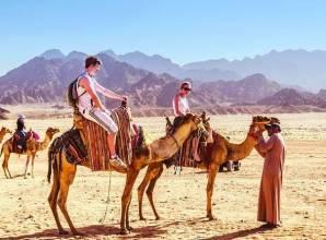 ركوب الجمال عند غروب الشمس في شرم الشيخ
